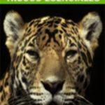 leer MAC OS X LEOPARD: TRUCOS ESENCIALES gratis online