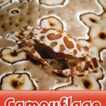 leer OXFORD READ AND DISCOVER 2 CAMOUFLAGE MP3 PACK gratis online